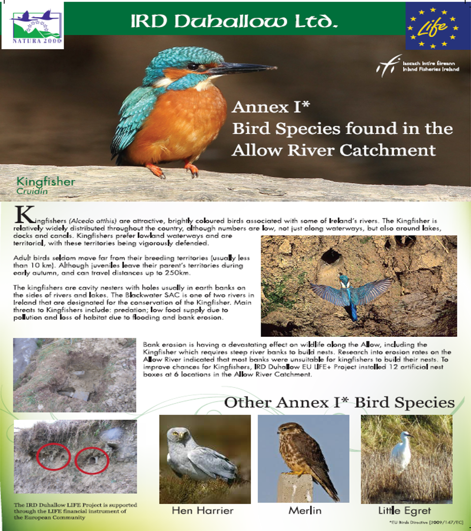 Thumbnail for Annex brochure png | IRD Duhallow Life & Raptor Life