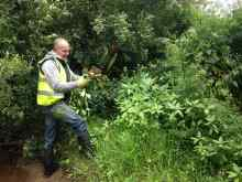 Removing Himalayan balsam within the Duhallow region